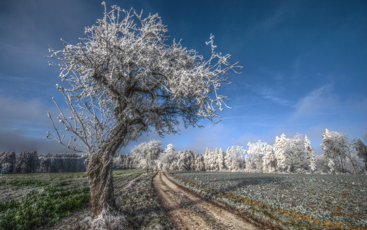 Late Fall Wallpaper Frosty Trees Fields Amp Path Wallpapers Frosty Trees