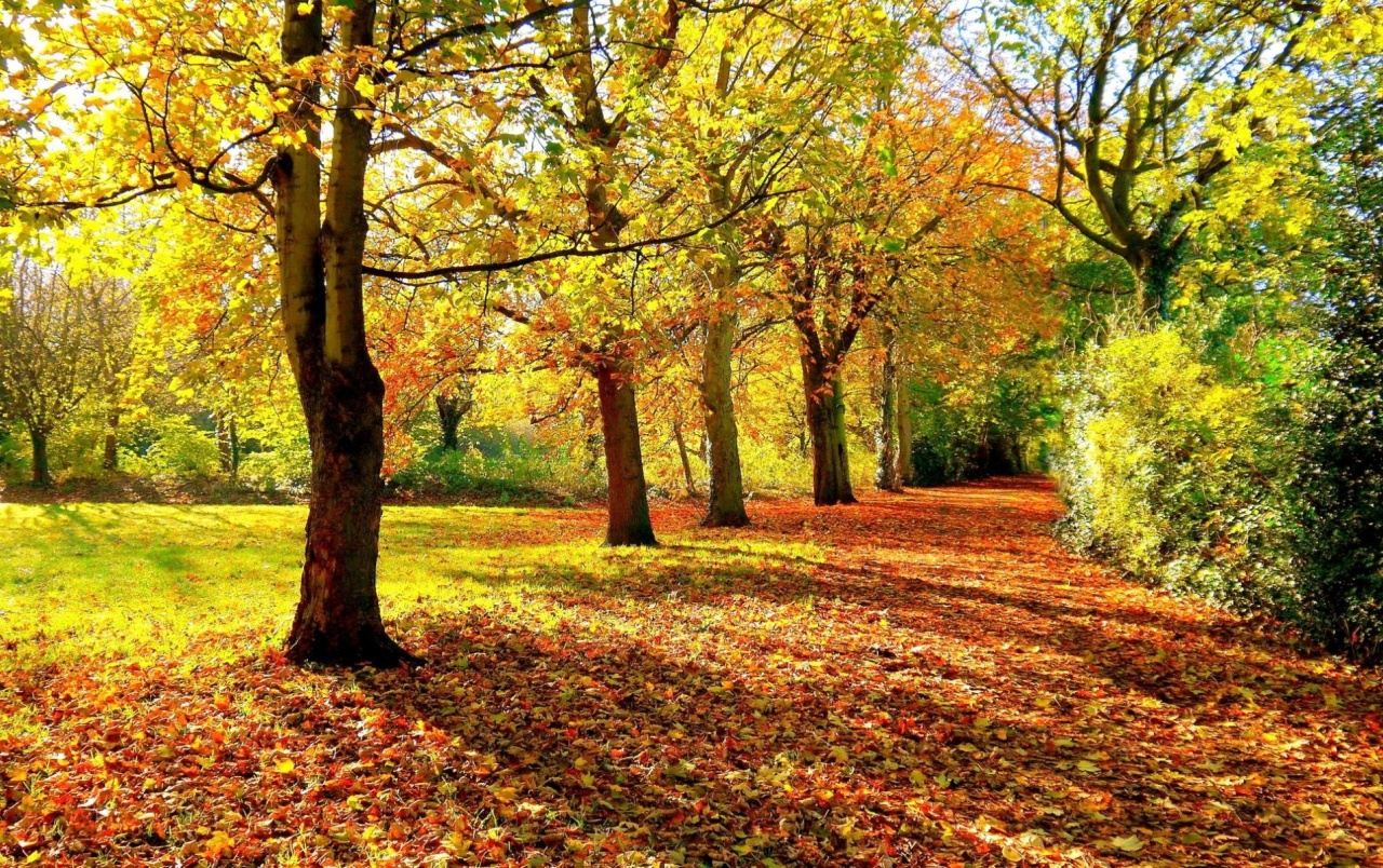 Free Fall Wallpapers For Ipad Autumn Forest Hedge Amp Leaves Wallpapers Autumn Forest