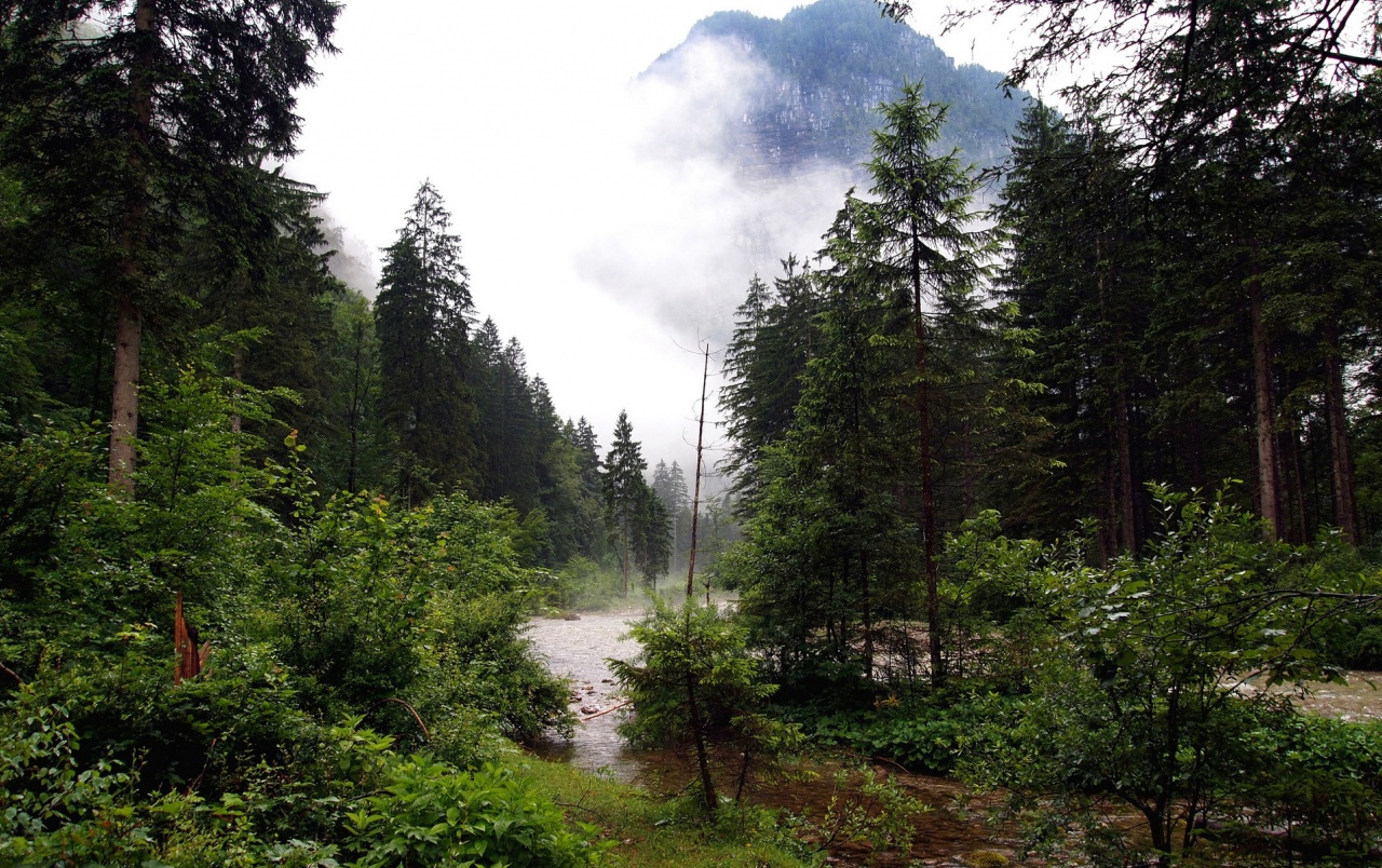 3d Wallpaper For Galaxy Y Creek Forest Mountain Foggy Wallpapers Creek Forest