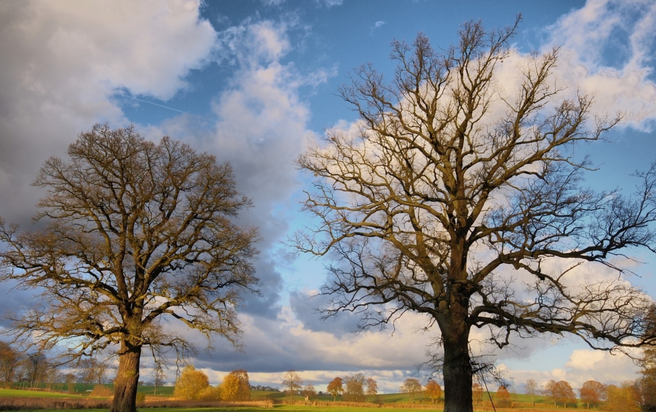 3d Wallpaper For Nexus 5 Pretty Bare Trees Clouds Sky Wallpapers Pretty Bare