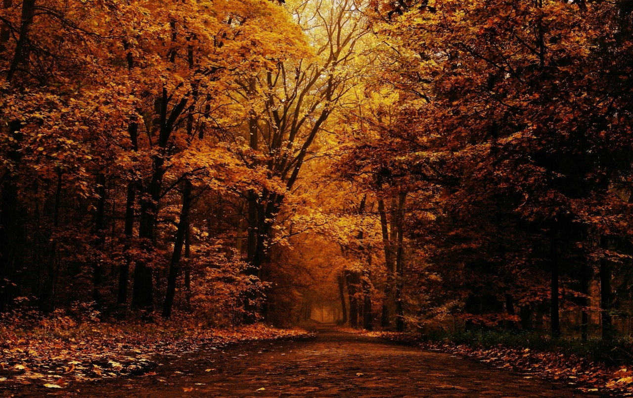 4k Laptop Wallpaper Fall Forest Orange Forest Amp Long Path Wallpapers Orange Forest
