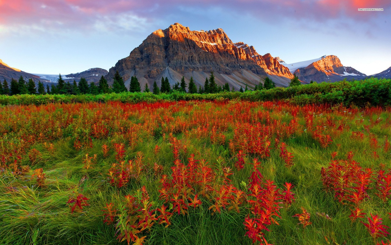 Mobile Flowers 3d Wallpapers Mountains Trees Red Flowers Wallpapers Mountains Trees