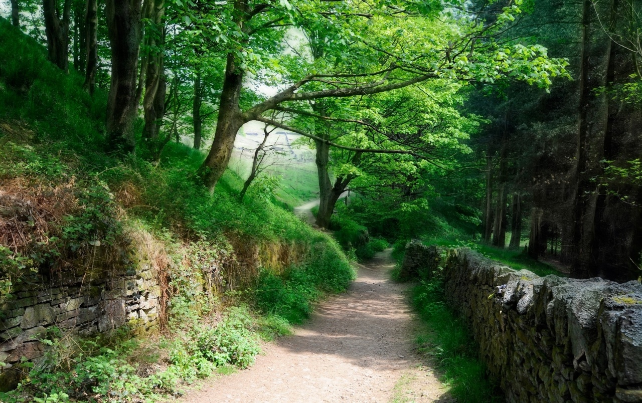 Htc Black Wallpaper Lovely Forest Path Earth Wall Wallpapers Lovely Forest