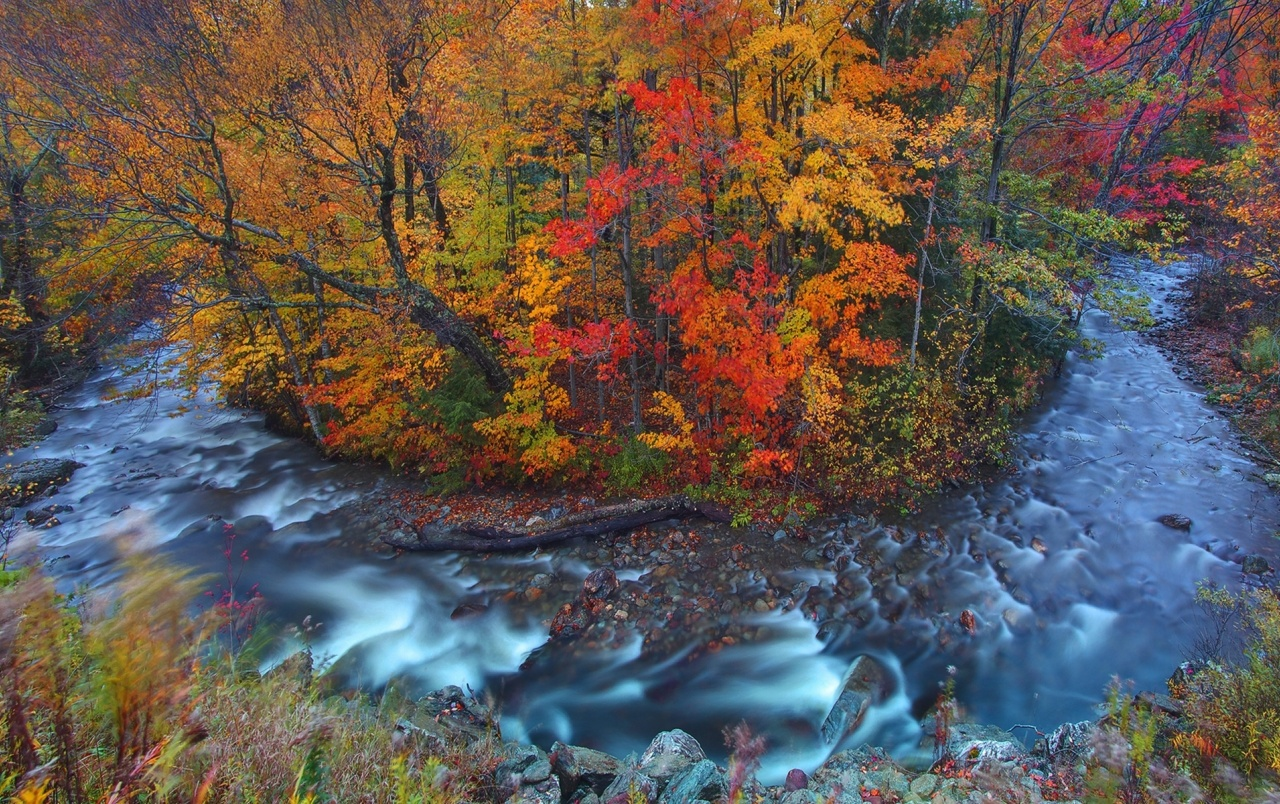Fall Scene Wallpaper For Iphone Autumn Forest Amp Wild Stream Wallpapers Autumn Forest