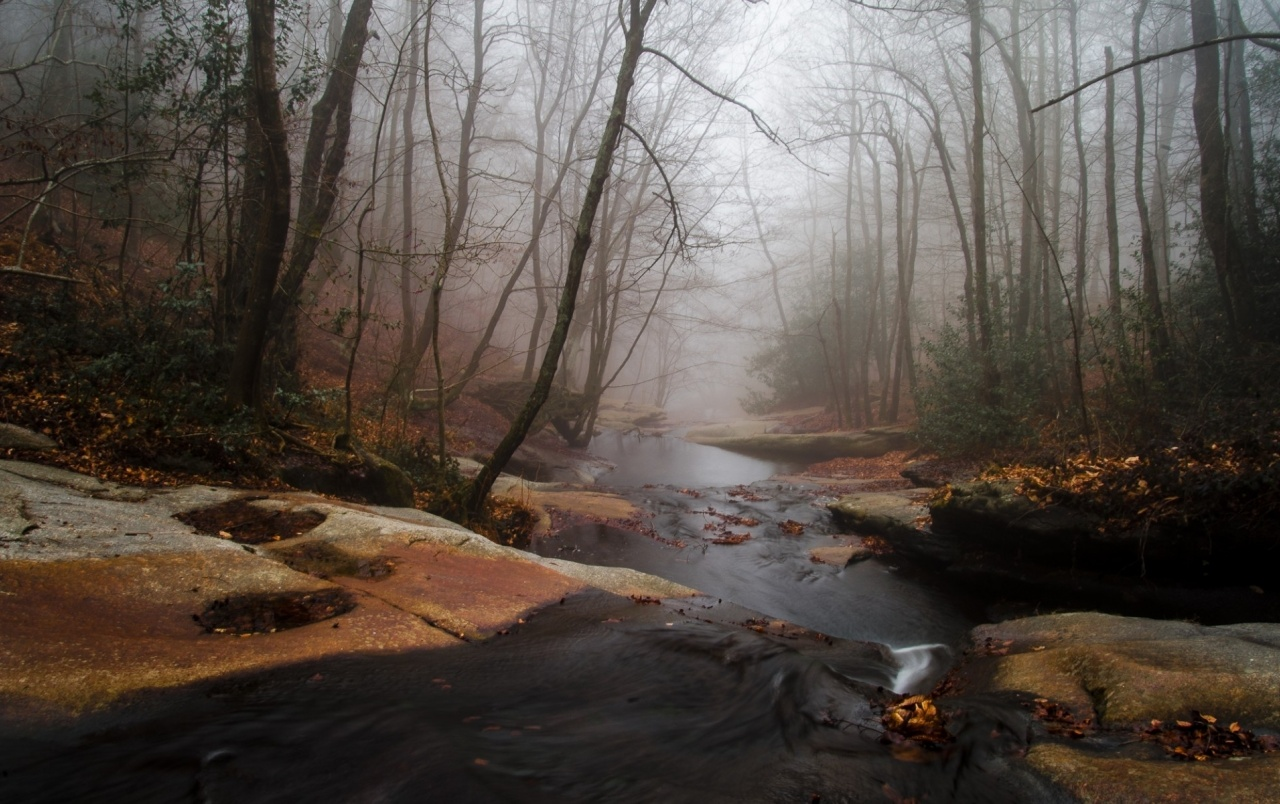 3d Galaxy Wallpaper Widescreen Foggy Forest Creek Rocks Wallpapers Foggy Forest Creek