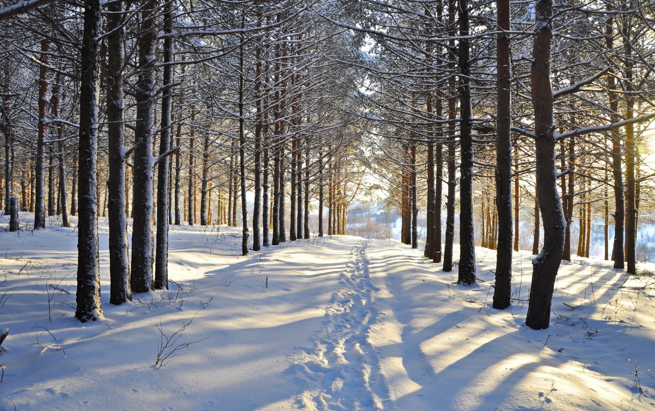 3d Christmas Wallpaper Backgrounds 2015 Snowy Forest Steps Vale Sunny Wallpapers Snowy Forest