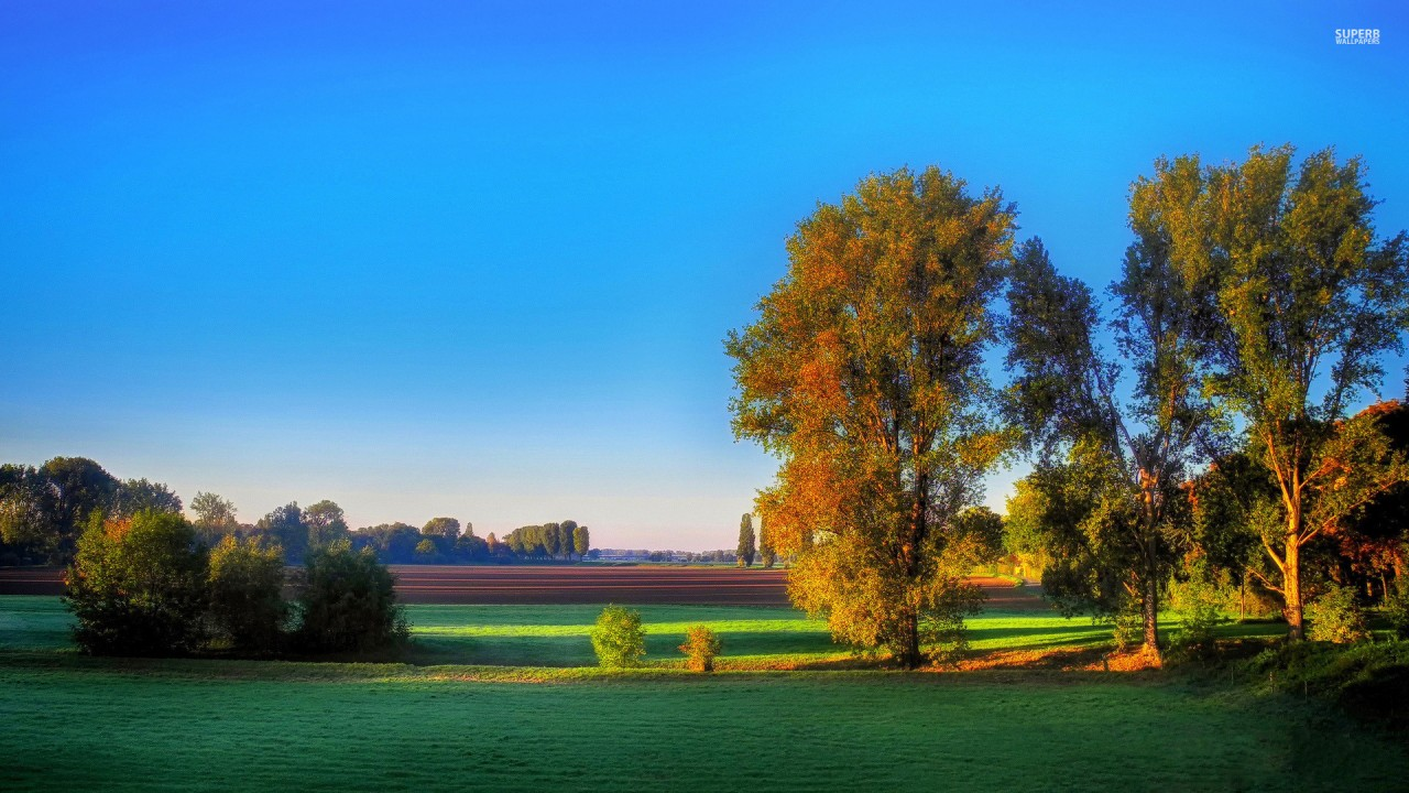 Fall Trees Iphone Wallpaper Calico Trees Amp Relaxing Fields Wallpapers Calico Trees