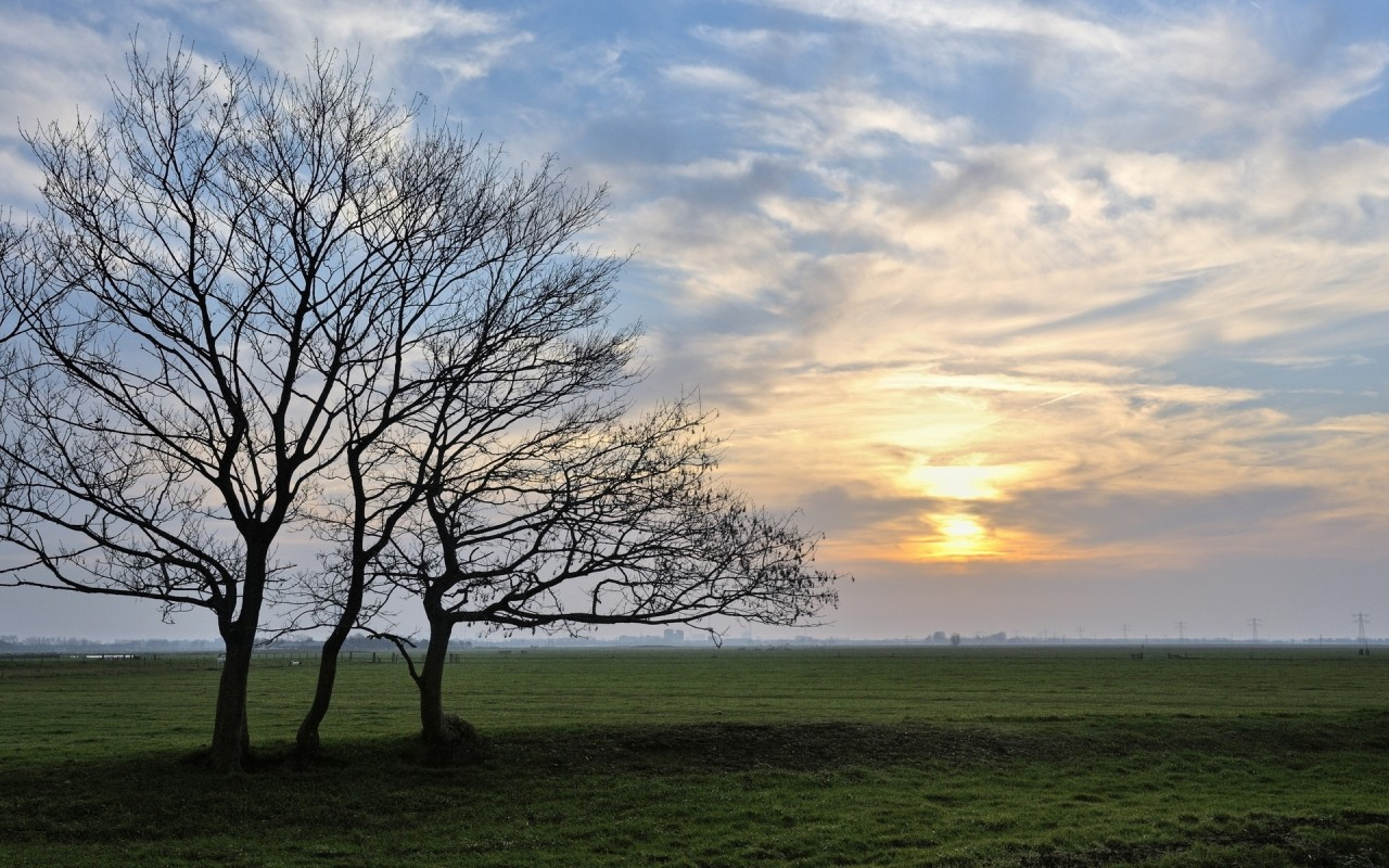 3d Wallpaper For Nexus 5 Field Bare Trees Clouds Sunset Wallpapers Field Bare