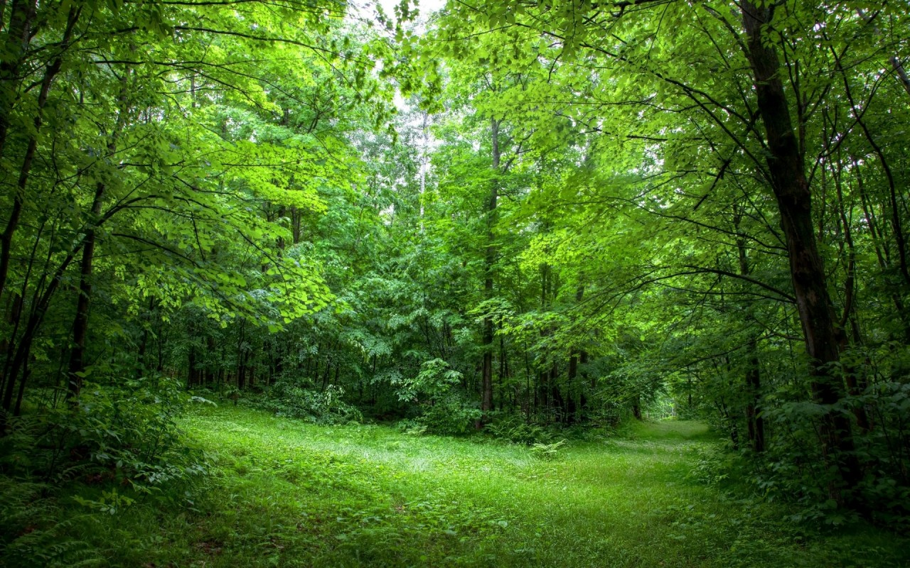 Good Night 3d Moving Wallpaper Lush Green Forest Path Sunny Wallpapers Lush Green