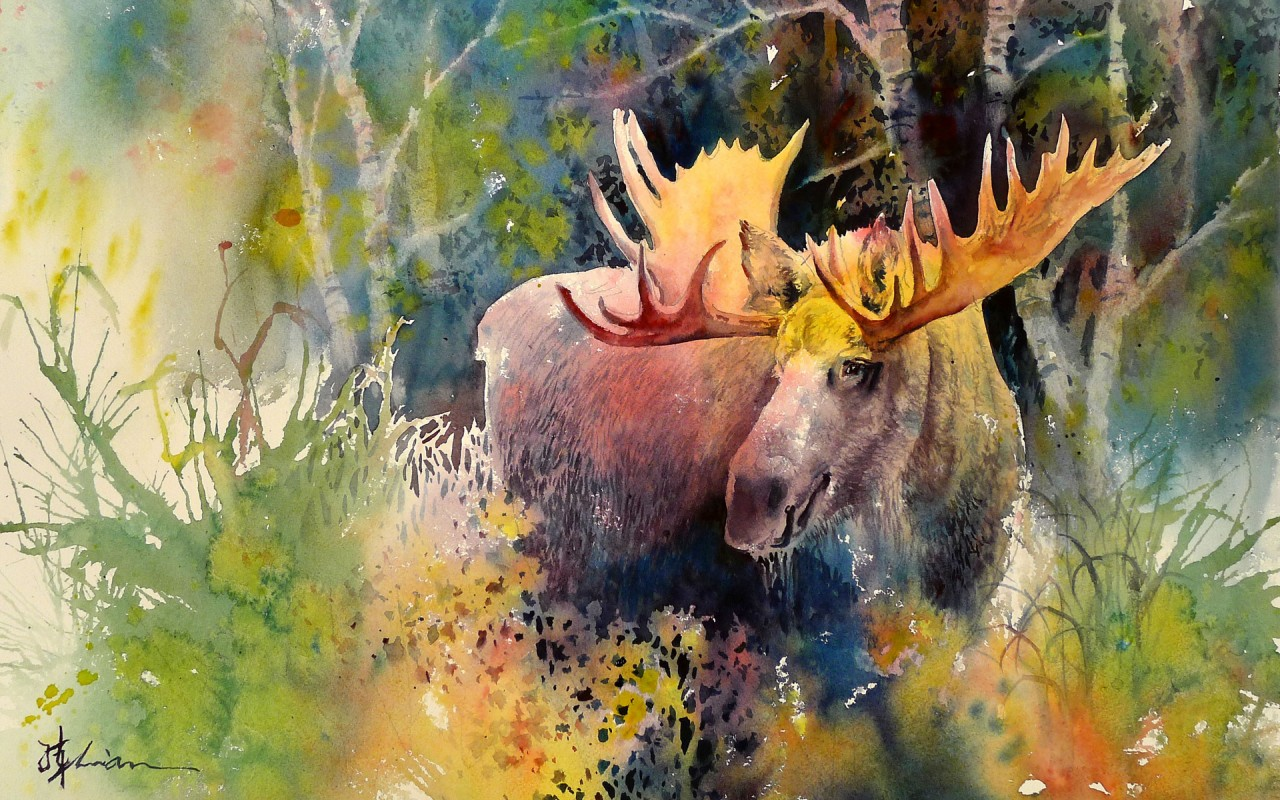 Fall Widescreen Wallpaper Majestic Moose Great Forest Wallpapers Majestic Moose