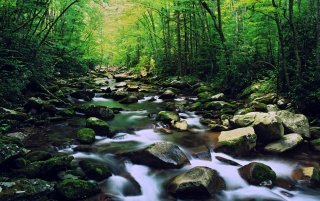 North Carolina Wallpaper Iphone Lovely Forest North Carolina Wallpapers Lovely Forest