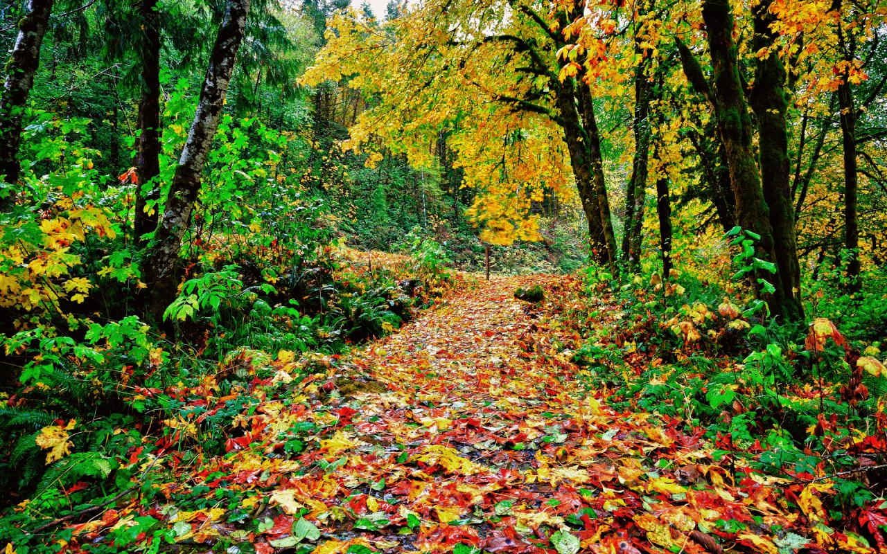 Fall Leaf Iphone Wallpaper Colorful Autumn Path Wallpapers Colorful Autumn Path