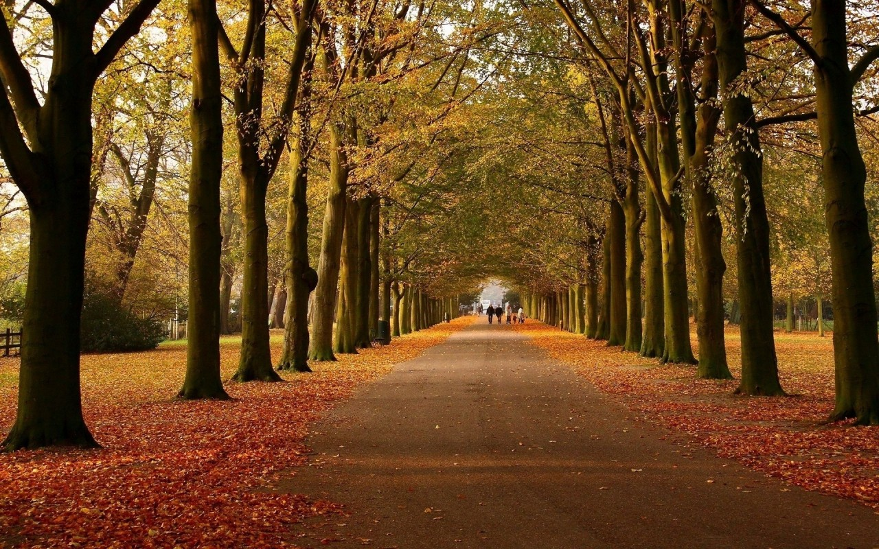 Virtual Hd Wallpapers Autumn Avenue Walk Way Wallpapers Autumn Avenue Walk Way