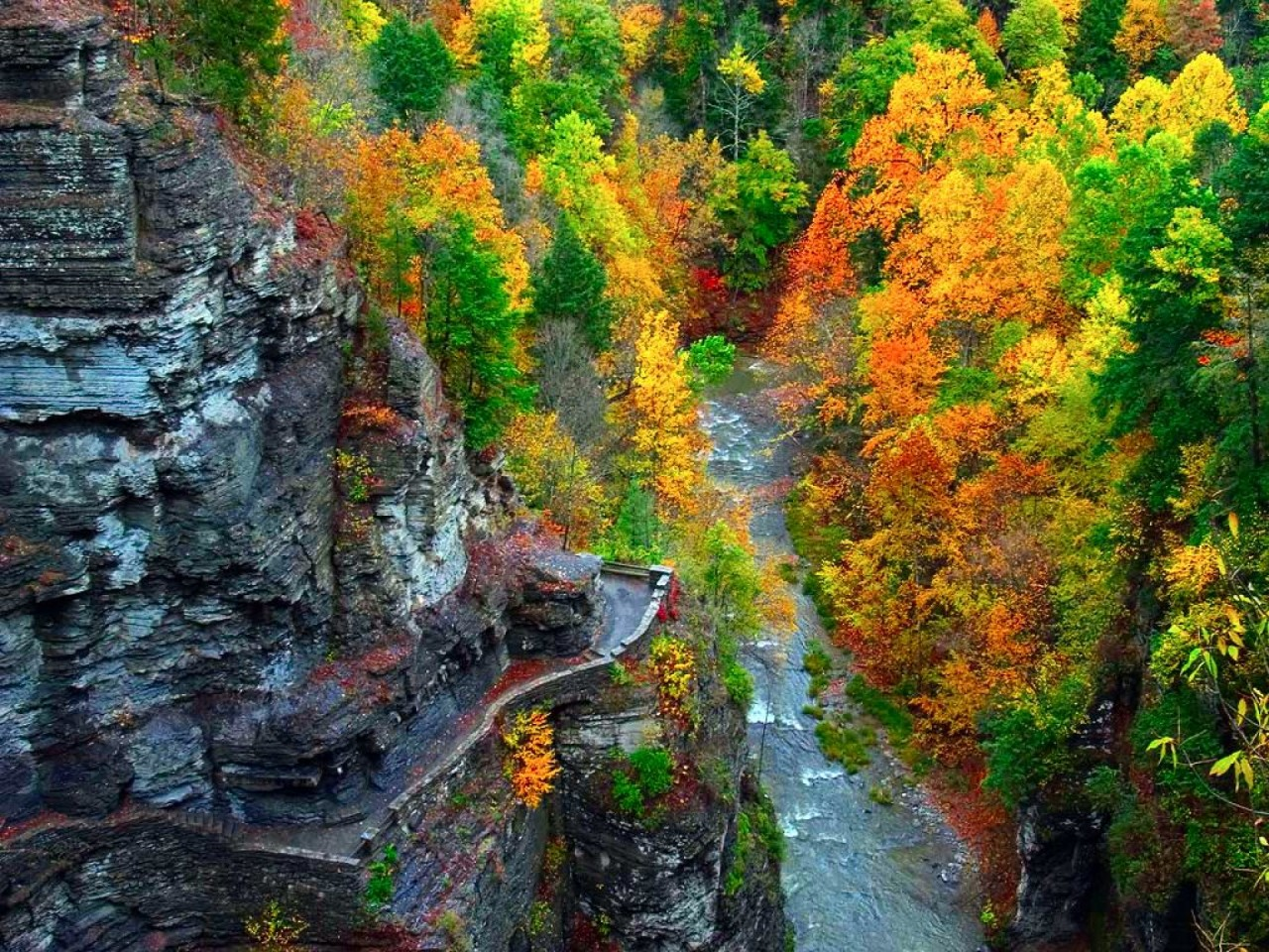 Fall Leaves Wallpaper Windows 7 Peak Lookout Vivid Trees Creek Wallpapers Peak Lookout