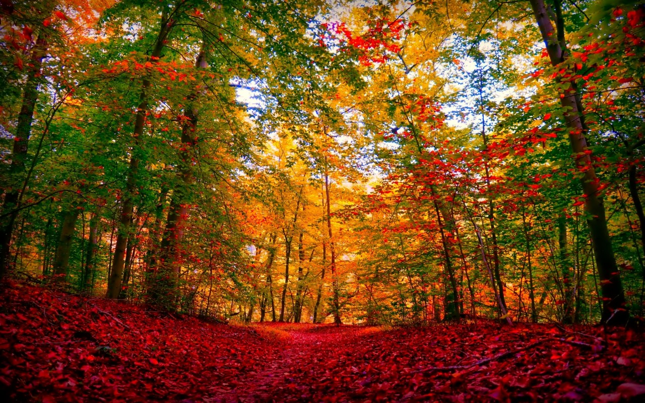 Fall Scenes For Ipad Wallpaper Autumn Forest Amp Red Carpet Wallpapers Autumn Forest