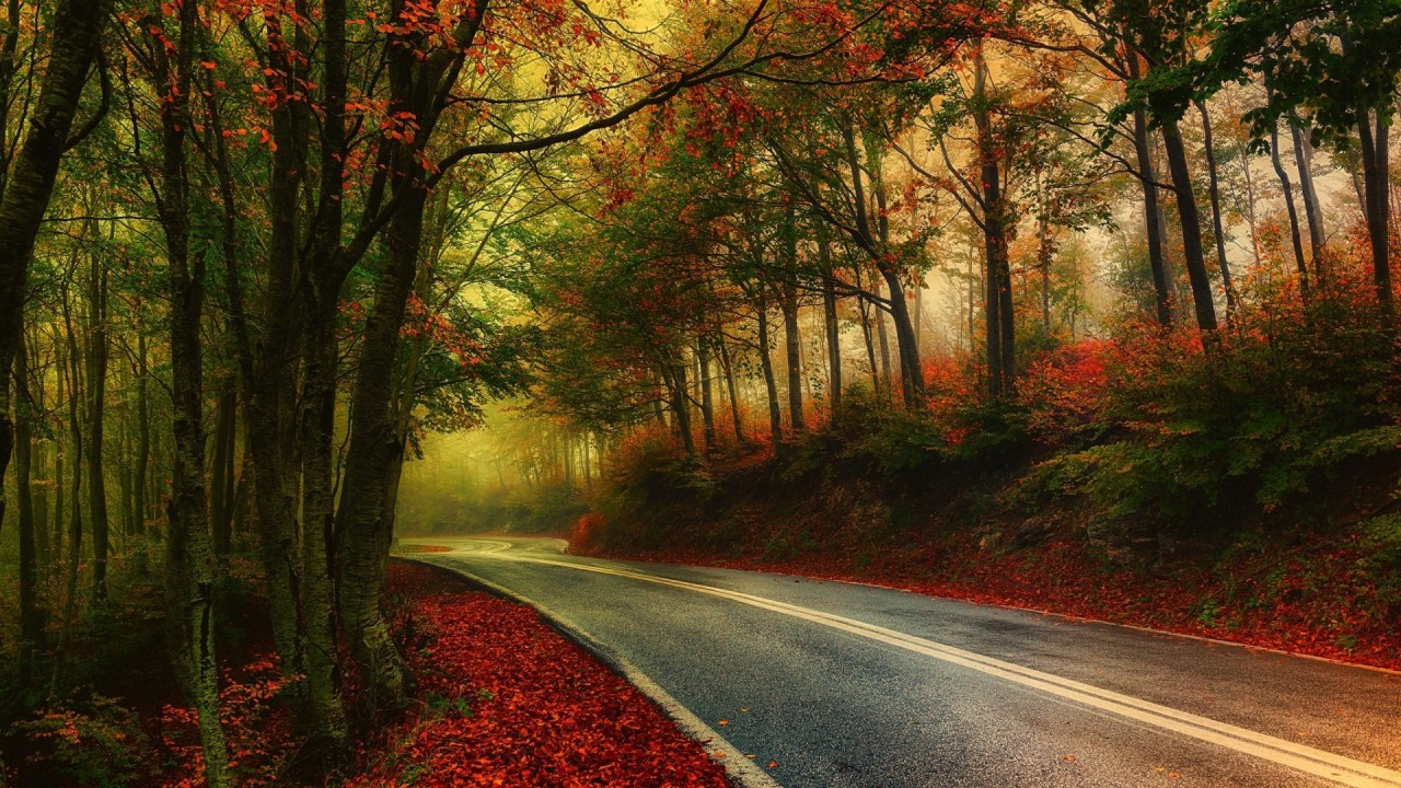 Fall Leaves Wallpaper For Ipad Autumn Wood Road Leaves Foggy Wallpapers Autumn Wood