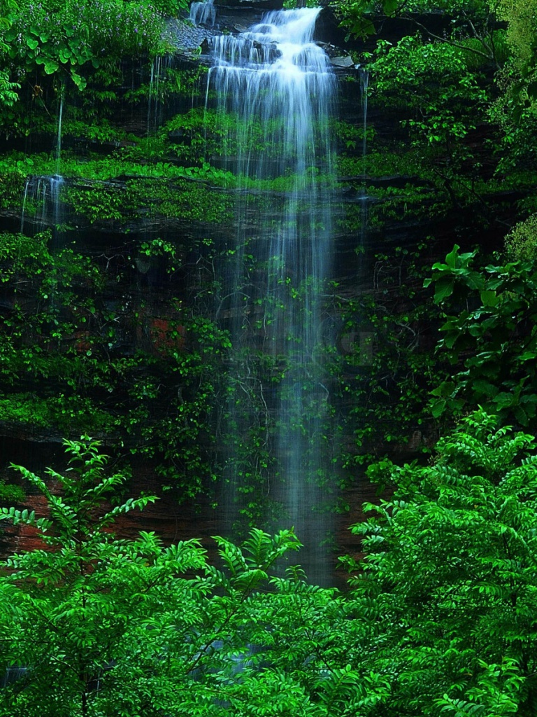 Green Forest Wallpaper Hd 768x1024 Waterfall Grass Green Forest Ipad Wallpaper