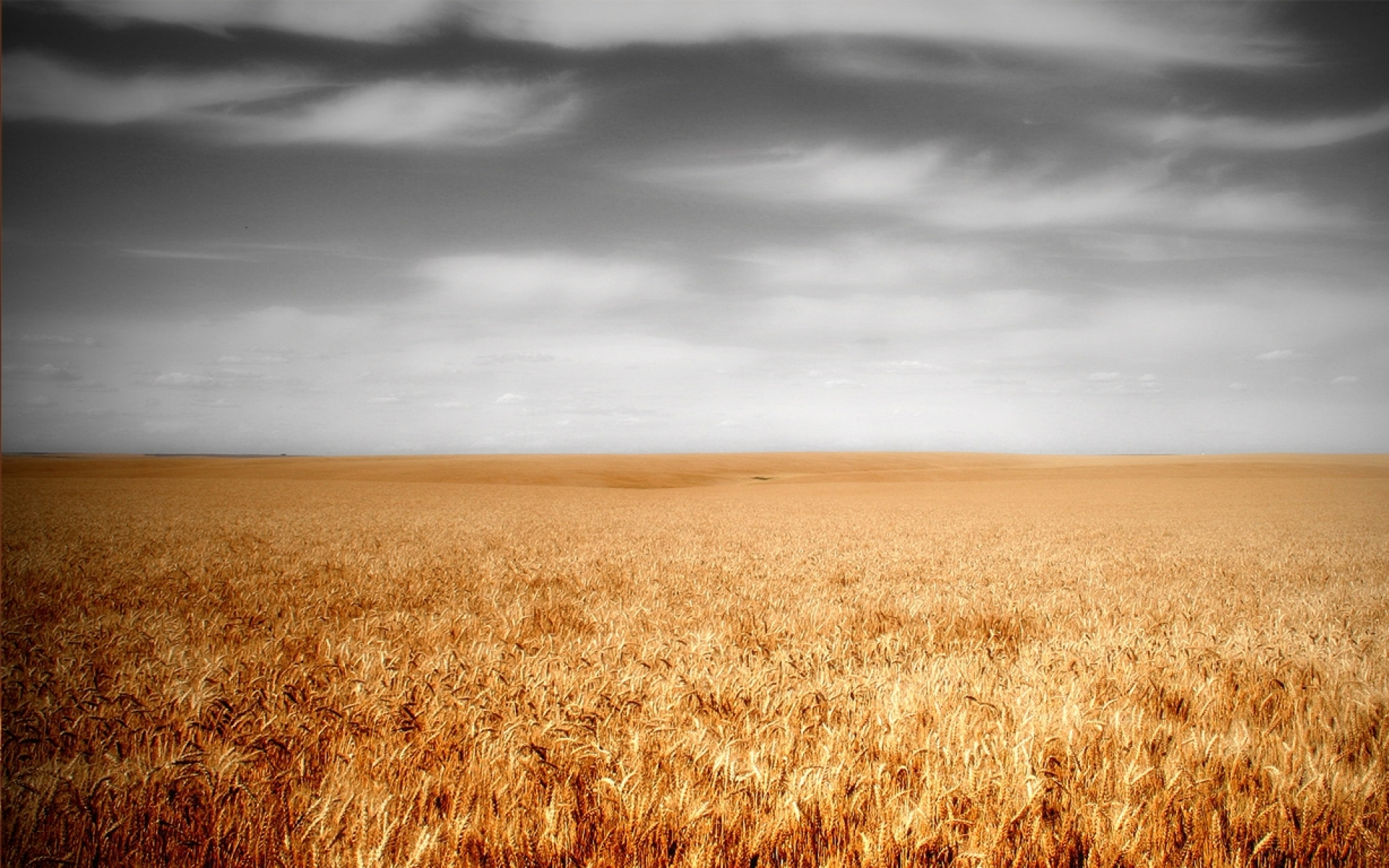 A Wallpaper Fall 1920x1200 Wheat Field Amp Gray Sky Desktop Pc And Mac Wallpaper