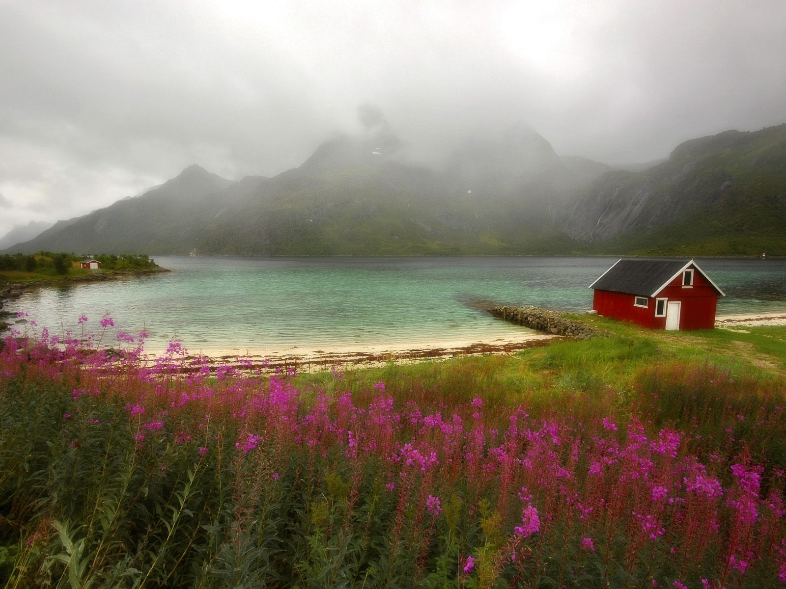 Animated Weather Wallpaper Iphone Wild Flowers And Lake Wallpapers Wild Flowers And Lake