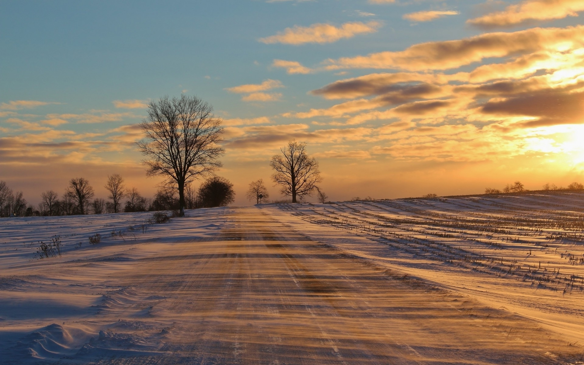 3d Tree Live Wallpaper Winter Road Field Trees Sunset Wallpapers Winter Road