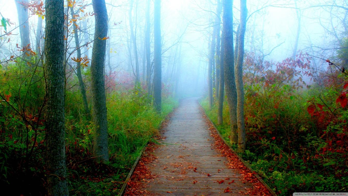 Free Fall Wallpaper For Ipad 2 A Fall Adventure In The Wisconsin Woods 4k Hd Desktop