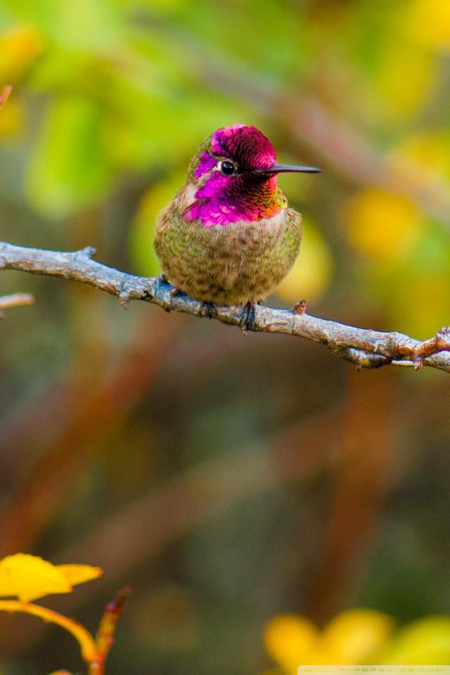 Autumn Fall Wallpaper 1600x900 Anna S Hummingbird Perched On A Branch 4k Hd Desktop