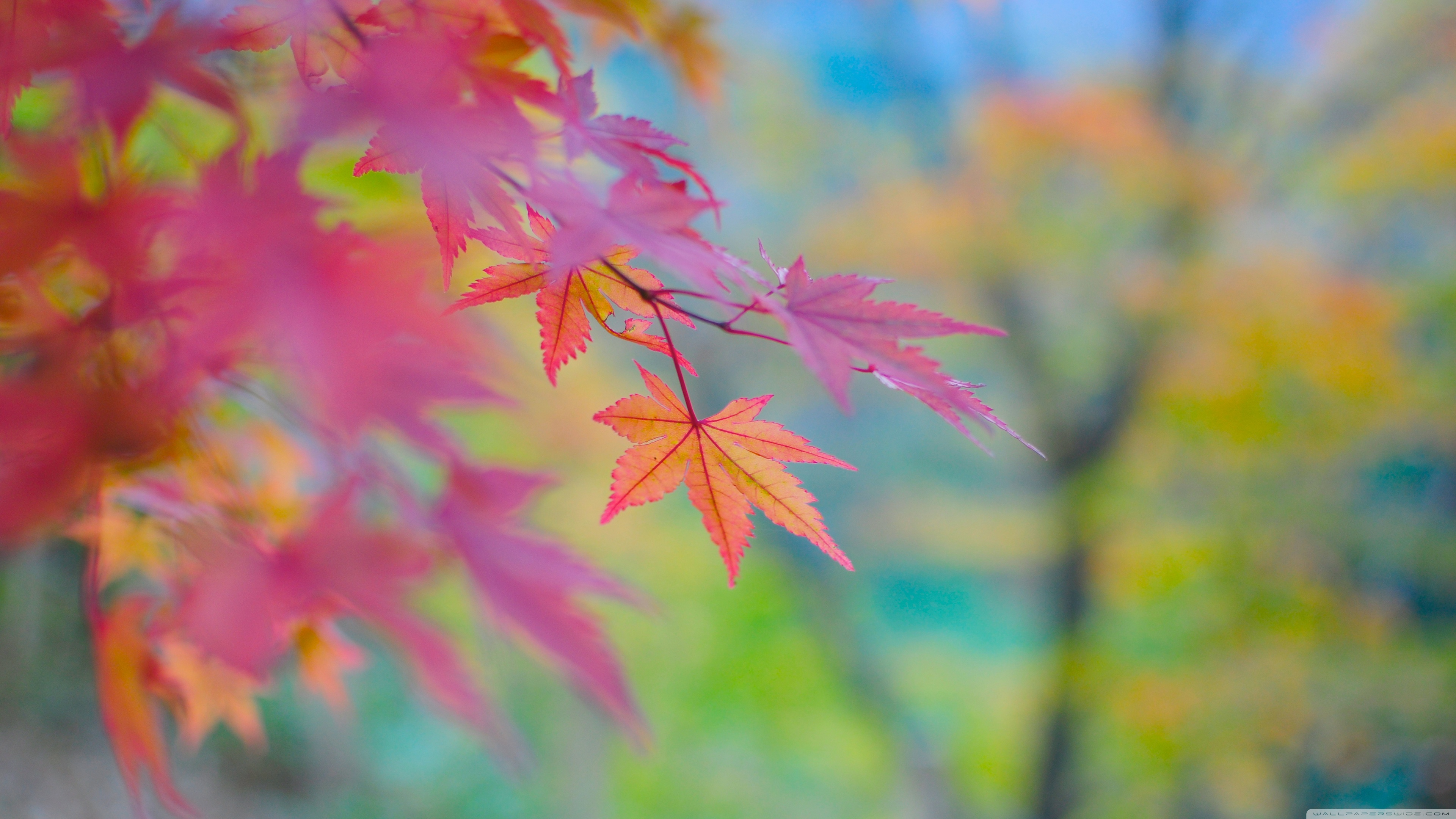 3d Colours Wallpaper Heart Autumn Colors In Japan 4k Hd Desktop Wallpaper For 4k