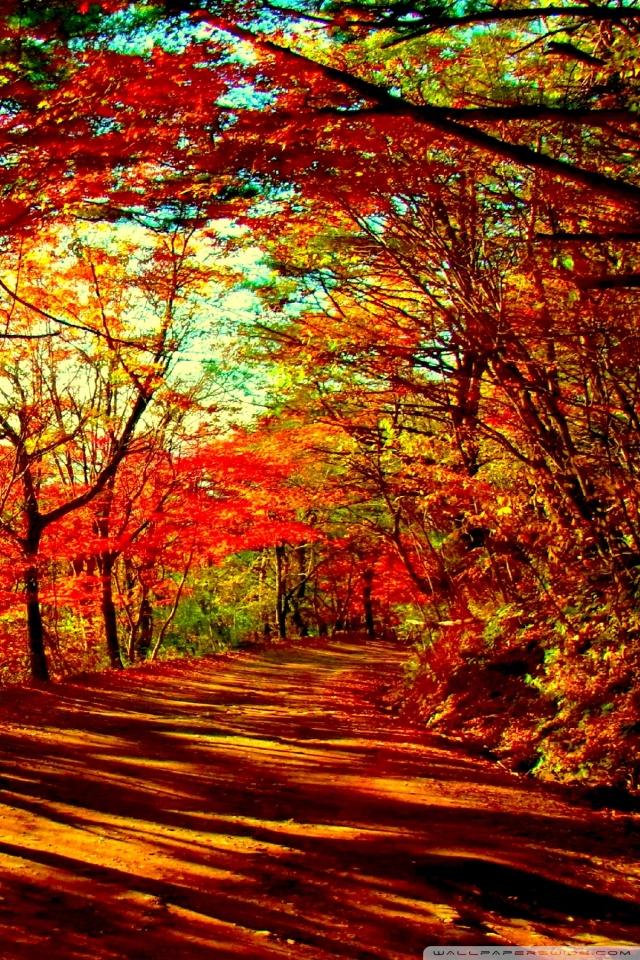 Iphone 5 Wallpaper Fall Autumn Forest 4k Hd Desktop Wallpaper For Dual Monitor