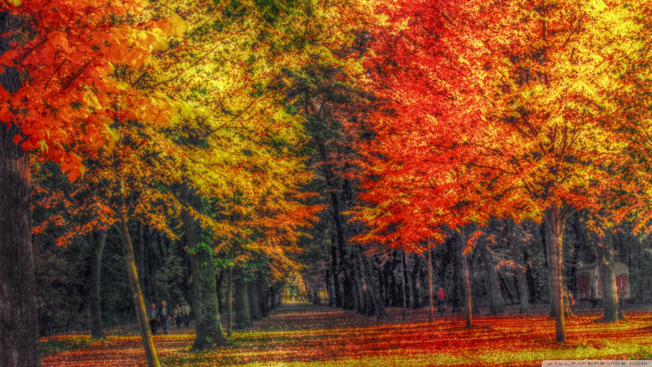 1280x800 Fall Hd Wallpaper Autumn Landscape Hdr 4k Hd Desktop Wallpaper For 4k Ultra