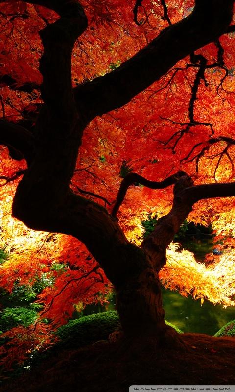 Panoramic Wallpaper Fall Beautiful Autumn 4k Hd Desktop Wallpaper For Dual