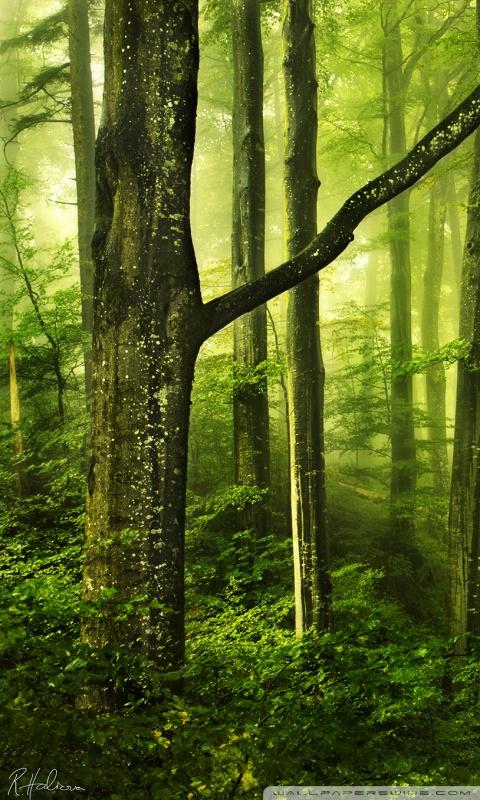 Ipad Hd Wallpapers 1080p Beautiful Green Forest 4k Hd Desktop Wallpaper For 4k