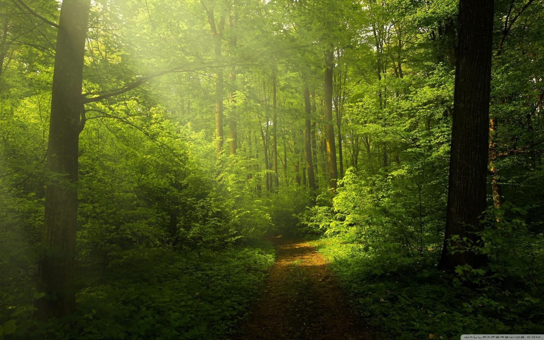 Dual Monitor Wallpaper Hd Beautiful Nature Image Green Forest 4k Hd Desktop