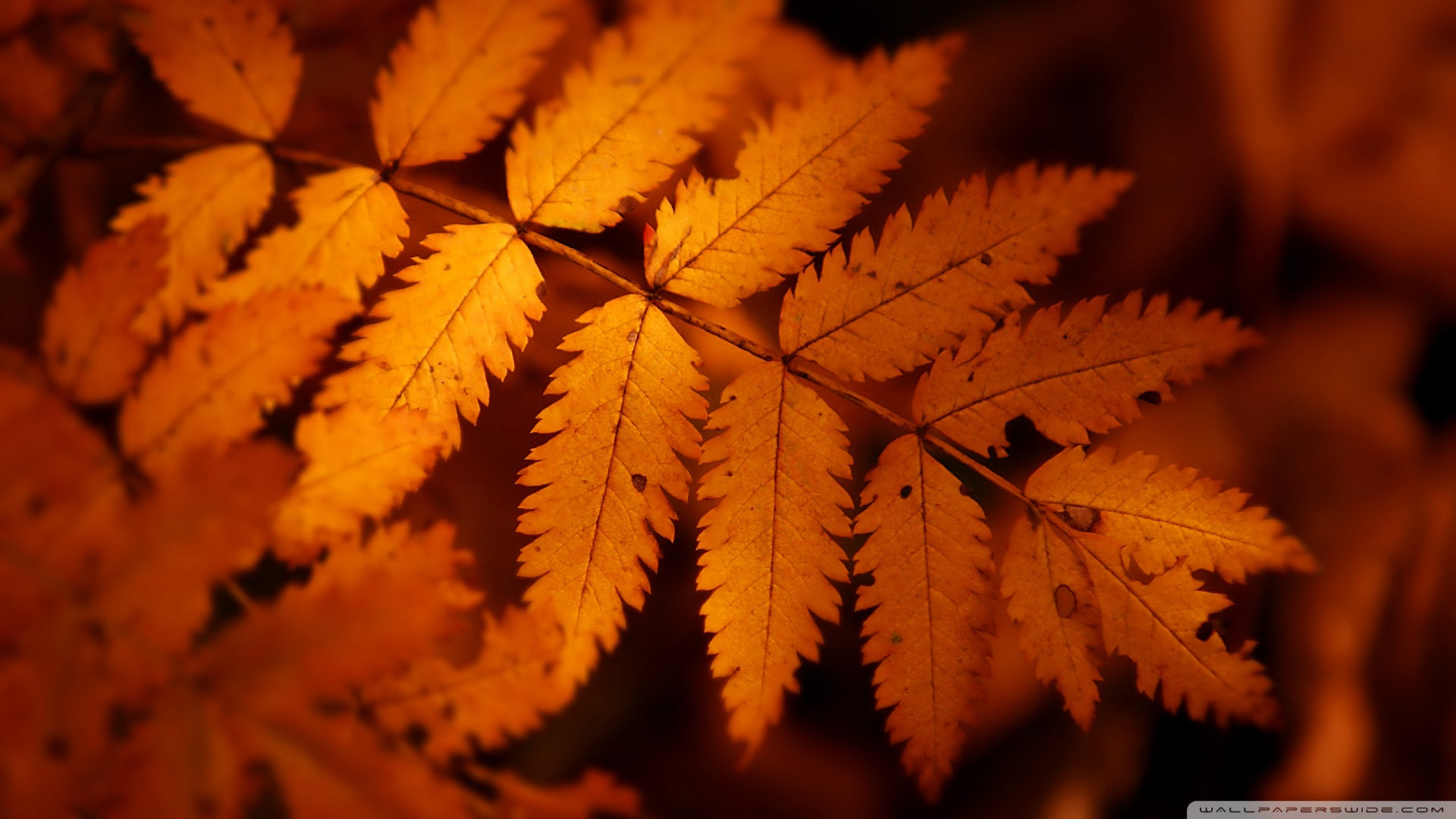 Fall Of The Leafe Wallpaper Brown Autumn Leaf 3 4k Hd Desktop Wallpaper For 4k Ultra