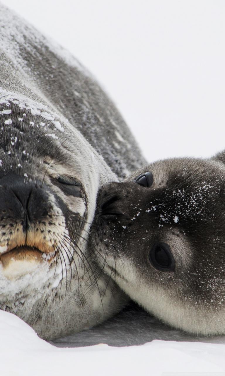 Cute Baby Wallpaper Download Hd Cute Baby Seal Kiss 4k Hd Desktop Wallpaper For 4k Ultra