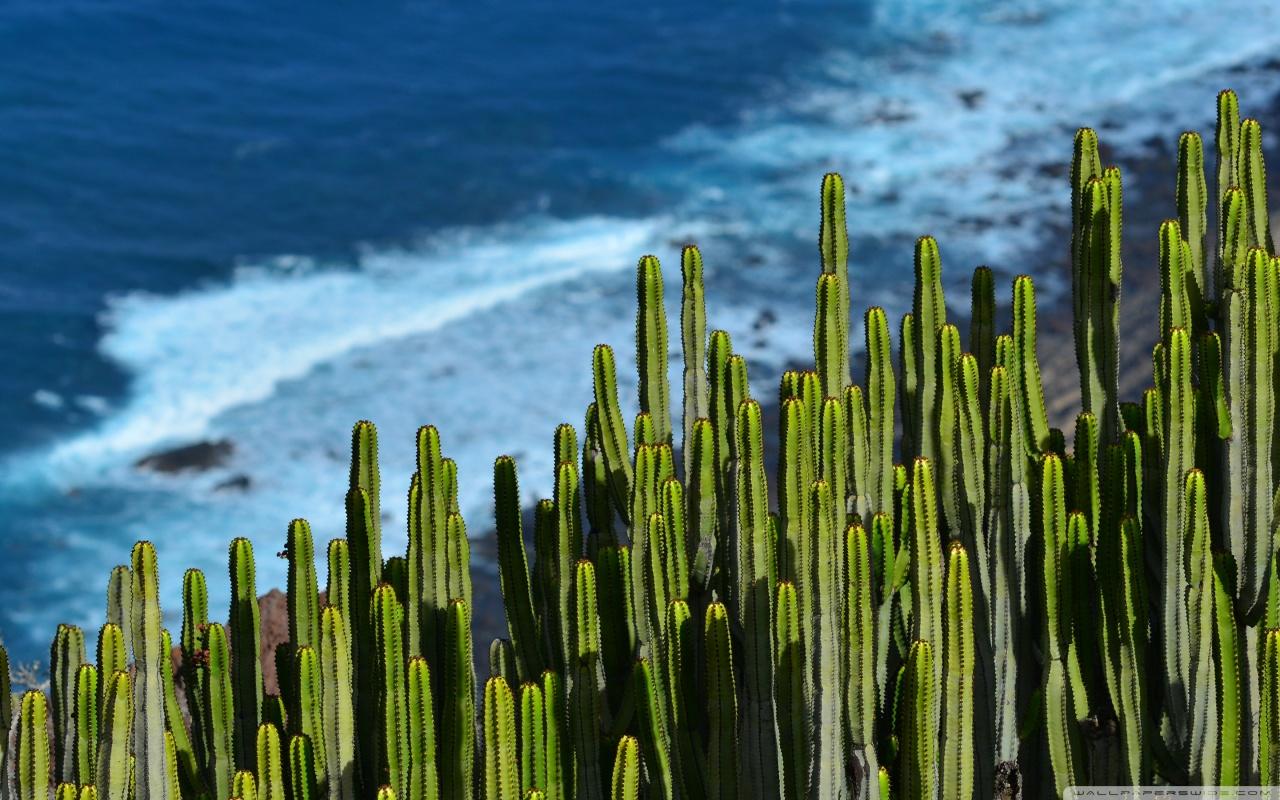 Cute Cactus Wallpaper Macbook Desert Cactus 4k Hd Desktop Wallpaper For 4k Ultra Hd Tv