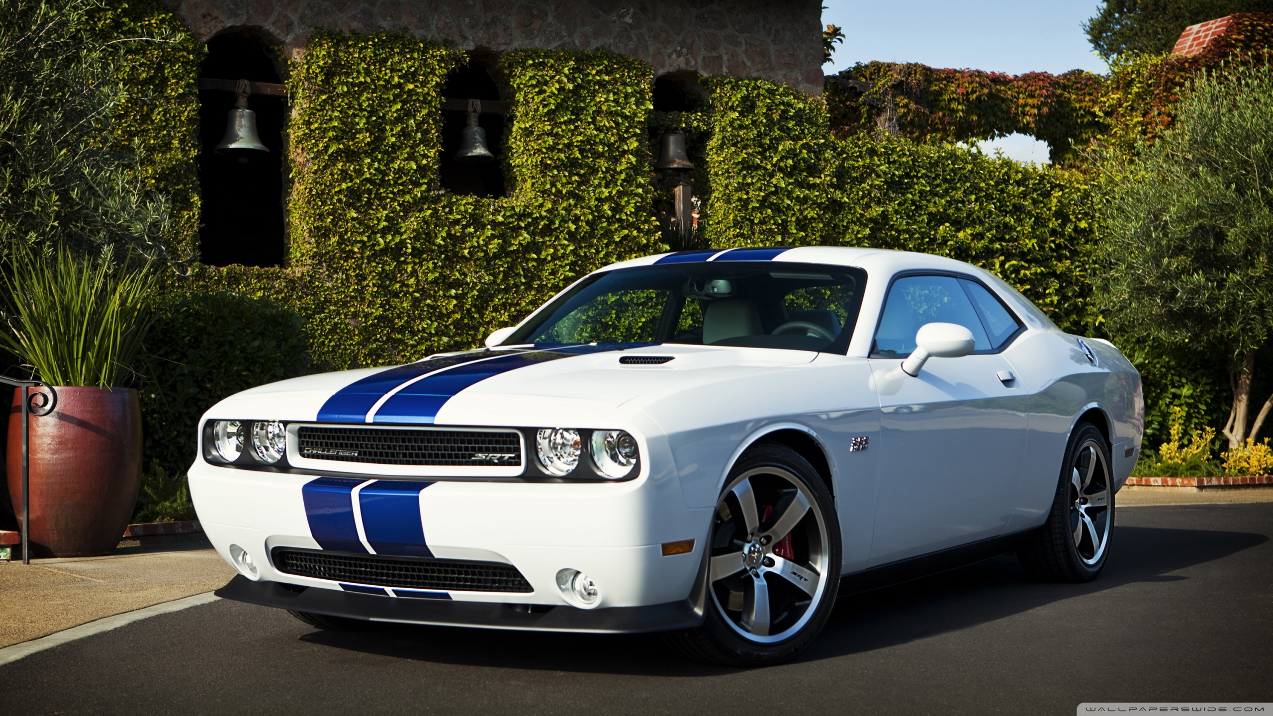 Challenger Hd Wallpaper Dodge Challenger Srt8 Blue Stripes 4k Hd Desktop Wallpaper For
