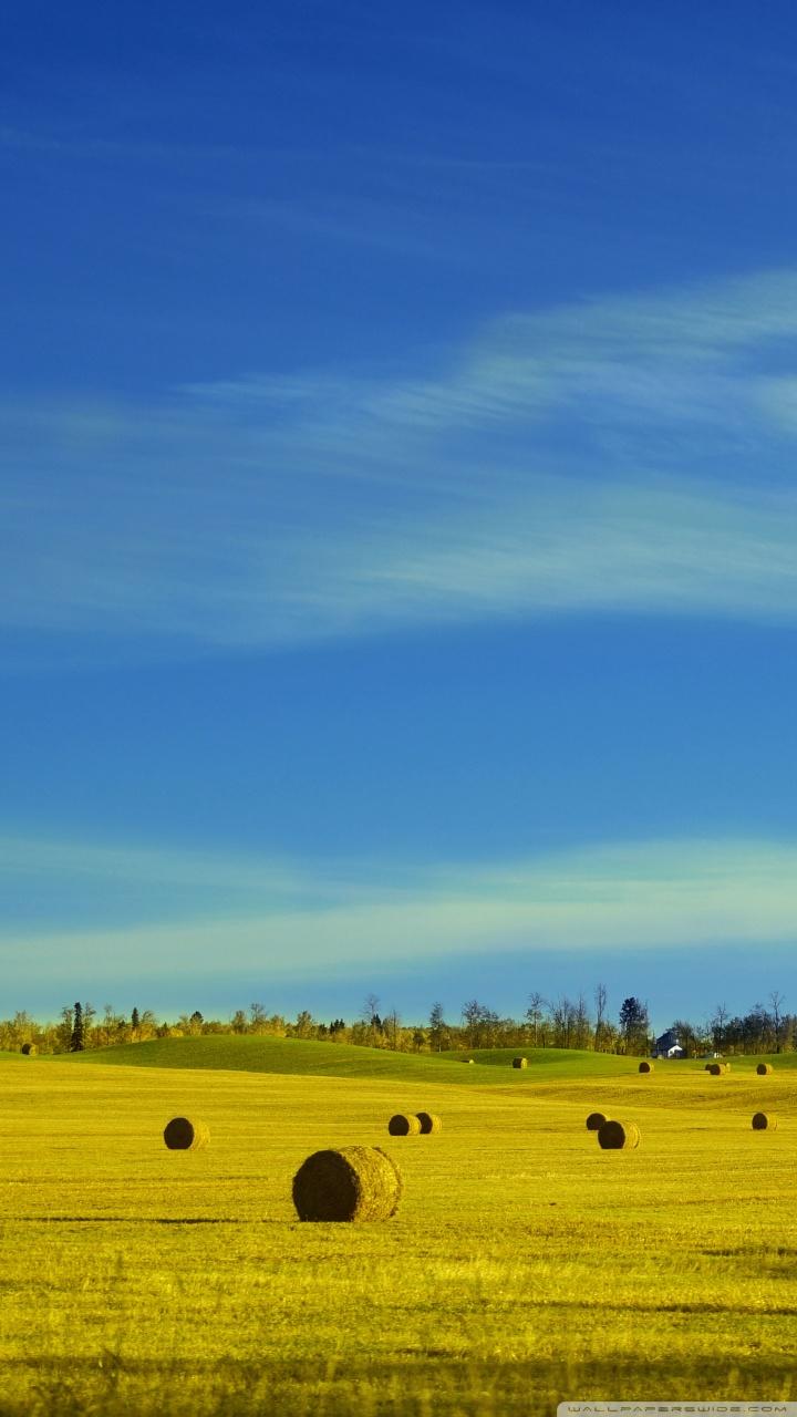 1440x2560 Uhd Wallpaper Fall Hay Bales In A Field 4k Hd Desktop Wallpaper For 4k Ultra