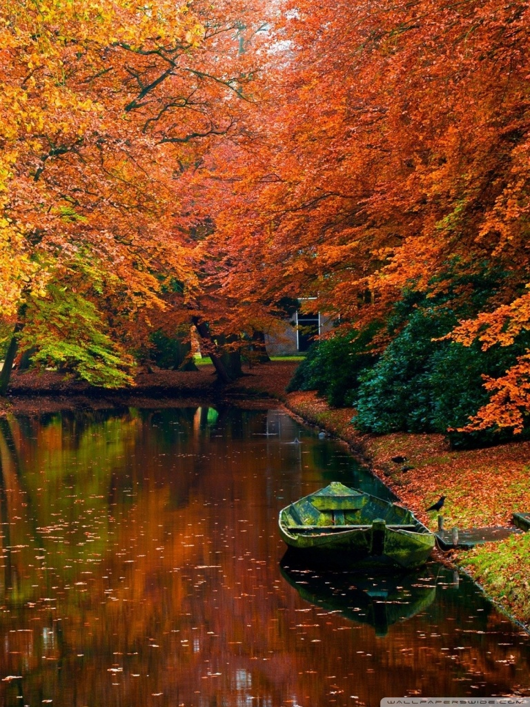 Falling Maple Leaves Wallpaper Lake In Autumn Landscape 4k Hd Desktop Wallpaper For 4k