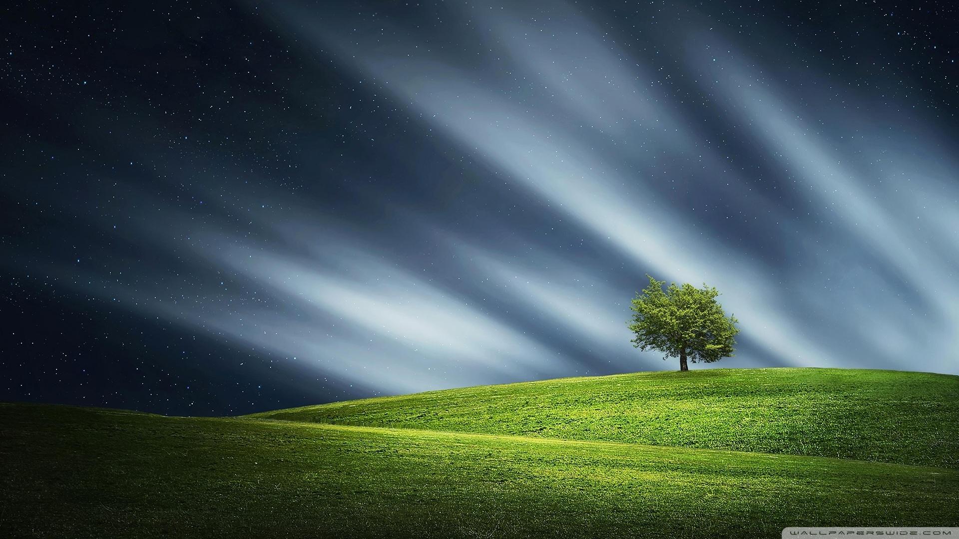 Hd 3d Nature Wallpapers 1080p Widescreen Lone Tree 4k Hd Desktop Wallpaper For 4k Ultra Hd Tv