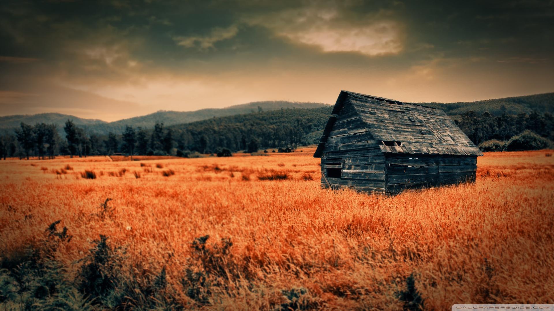 Fall Woods Wallpaper Lonely Countryside 4k Hd Desktop Wallpaper For 4k Ultra Hd