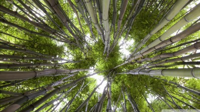 Looking Up In A Bamboo Forest 4K HD Desktop Wallpaper for 4K Ultra HD TV • Tablet • Smartphone ...