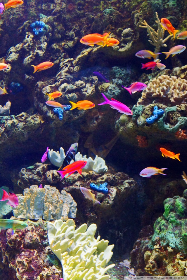 Soni Name 3d Wallpaper Los Angeles Shoreline Aquatic Park Aquarium Of The
