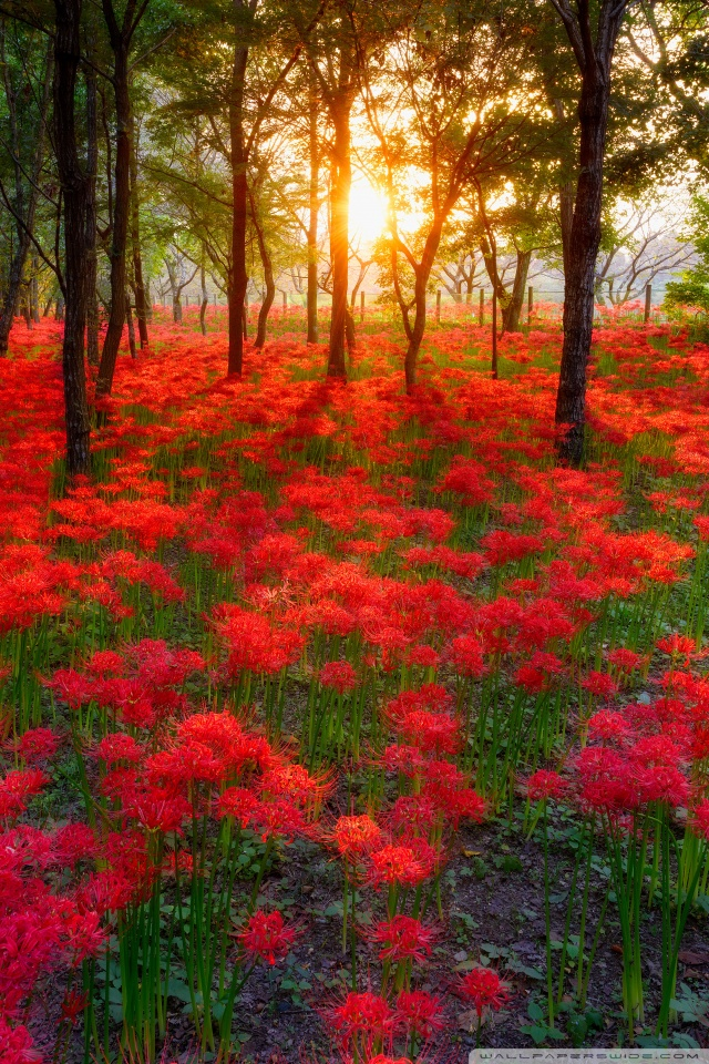 Girls Wallpaper 2048x1152 Most Beautiful Sunsets In The World 4k Hd Desktop