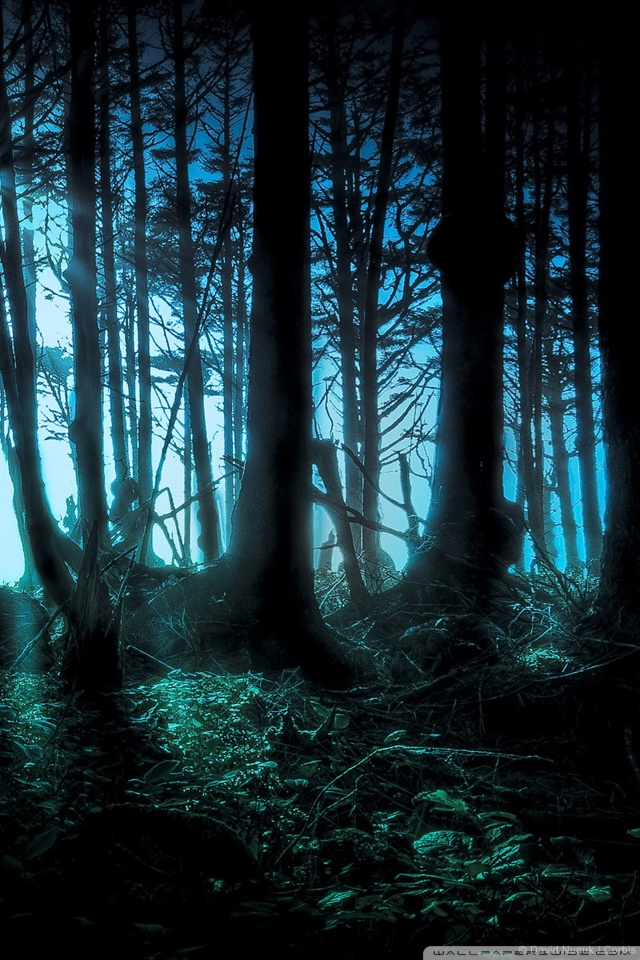 Zedge Wallpaper Hd Mysterious Forest 4k Hd Desktop Wallpaper For 4k Ultra Hd