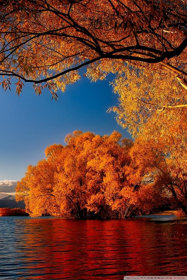 Fall Wallpaper And Screensavers For Free New Zealand Autumn 4k Hd Desktop Wallpaper For 4k Ultra Hd