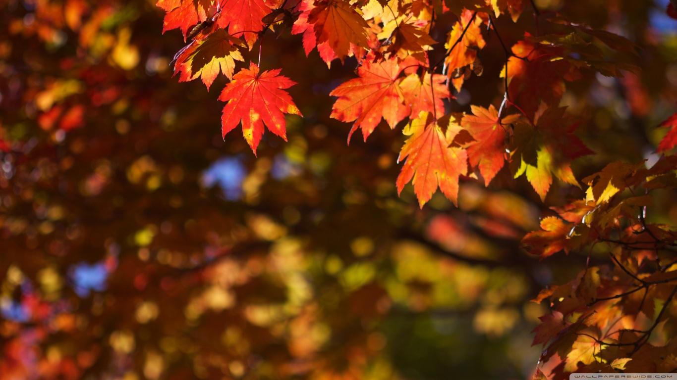 Fall Foliage Hd Wallpaper October In Japan 4k Hd Desktop Wallpaper For 4k Ultra Hd