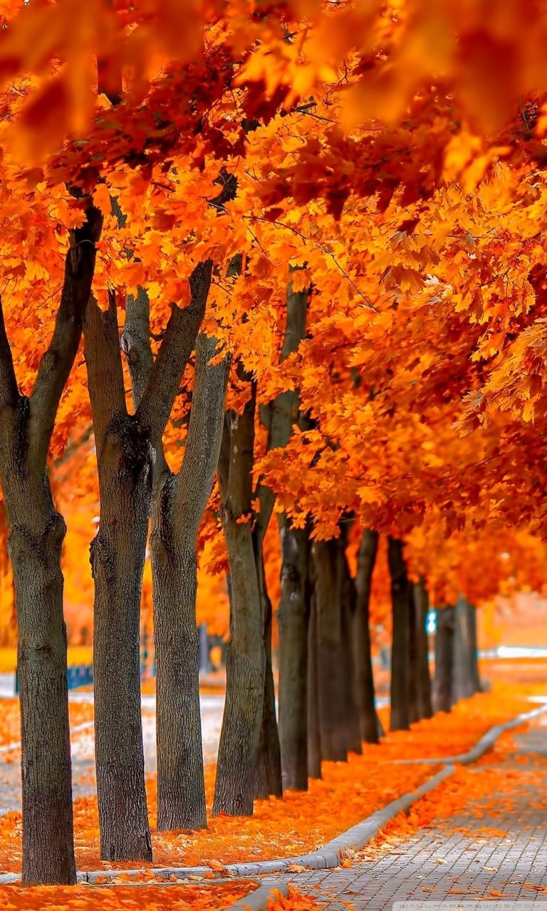 Fall Leaves Ipad Wallpaper Orange Trees Fall 4k Hd Desktop Wallpaper For 4k Ultra Hd