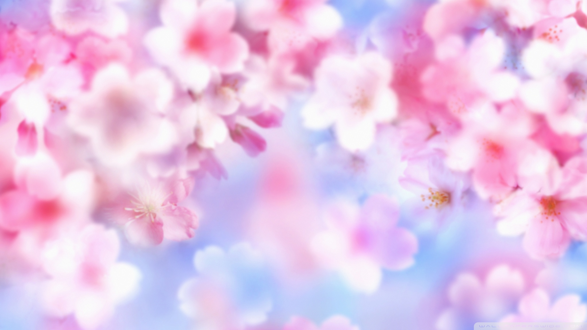 Pinterest Desktop Wallpaper Lotus Quote Pink Blossom Background 4k Hd Desktop Wallpaper For 4k
