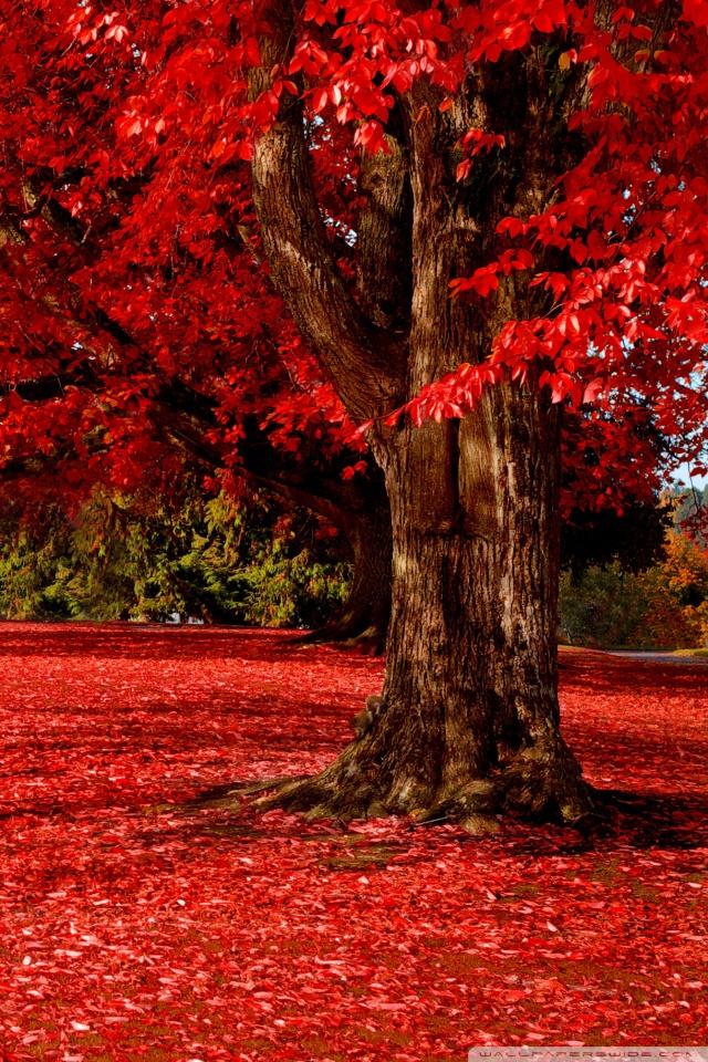 Dual Monitor Fall Wallpaper Red Autumn 4k Hd Desktop Wallpaper For 4k Ultra Hd Tv