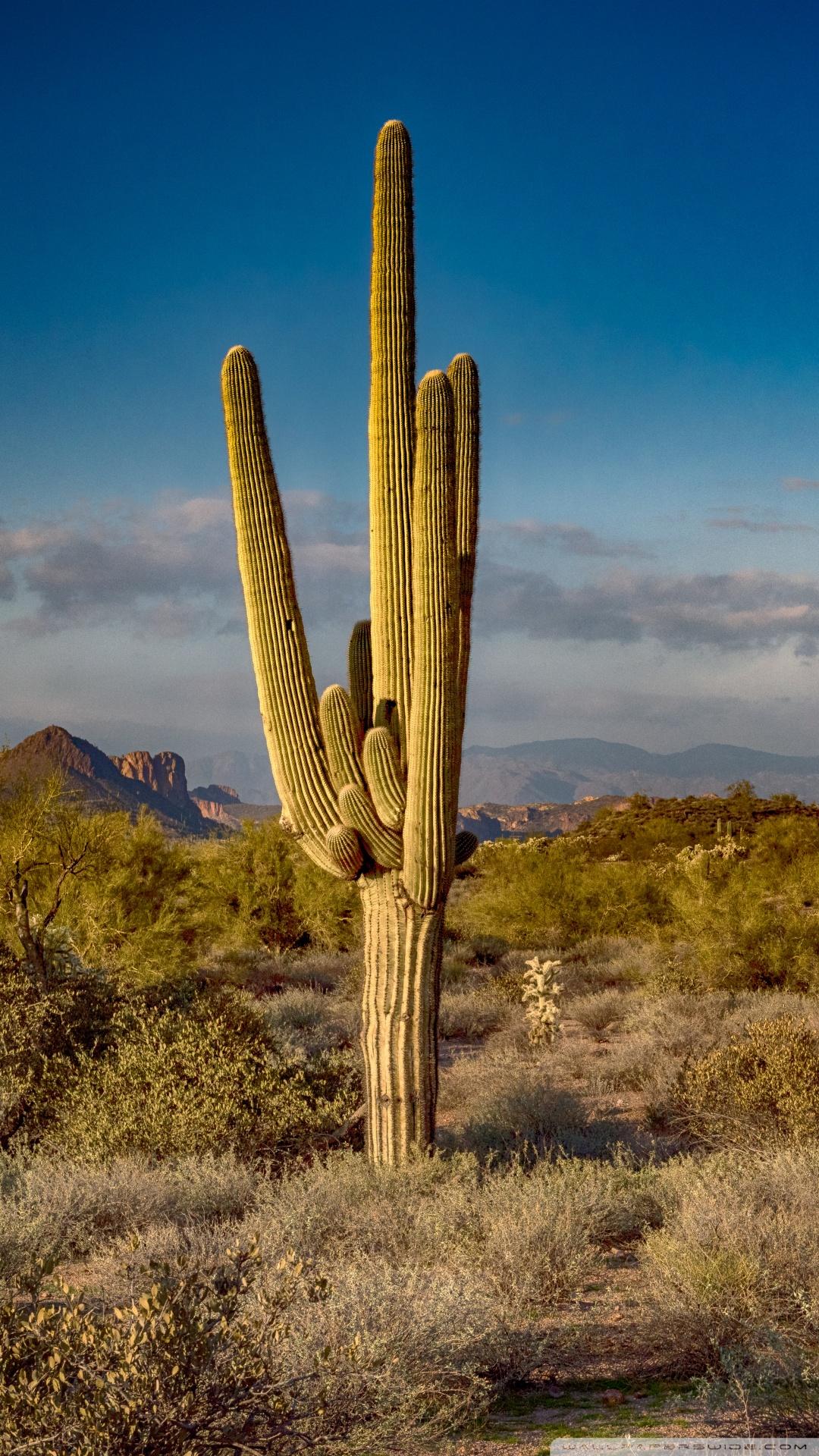 Wallpaper Hd Smartphone Saguaro Cactus Arizona 4k Hd Desktop Wallpaper For 4k